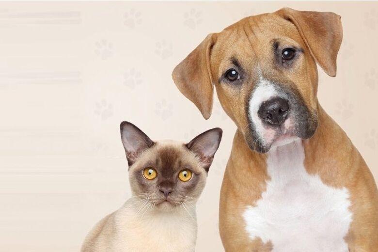 CCZ vacina cães e gatos na região do Grande Flórida -