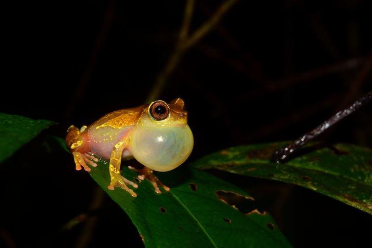 Expedições à Amazônia identificam 12 novas espécies de animais -