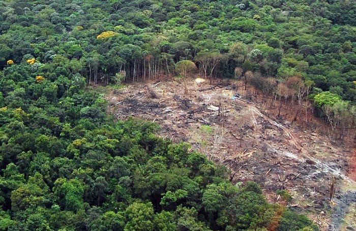FAO alerta para desafio mundial de enfrentar o desmatamento -