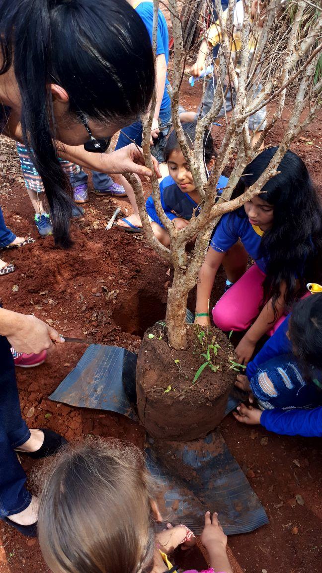 Imam doa mudas frutíferas para novo pomar na Escola Fazenda Miya - Crédito: Divulgação