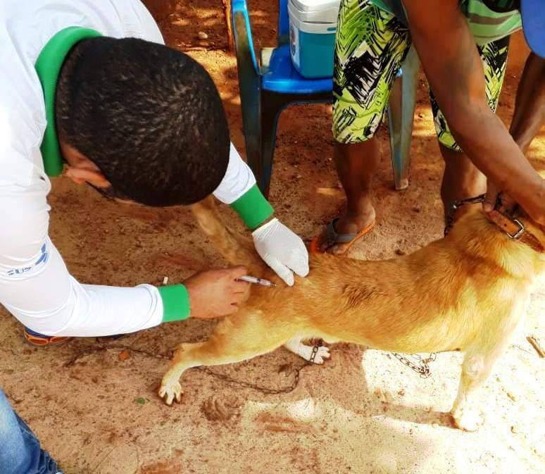 Vacinação de cães e gatos atende região do Terra Roxa e Guaicurus - Crédito: A. Frota
