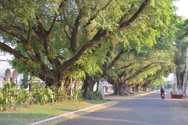 Inédito, Plano Diretor de Arborização de Dourados será concluído em 6 meses - Crédito: Marcos Ribeiro