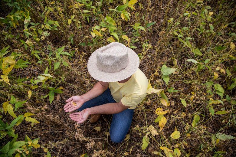 Com crescimento à vista, MT e MS já cultivaram 70% de suas lavouras de soja - Crédito: Marcelo Andrade/Gazeta do Povo