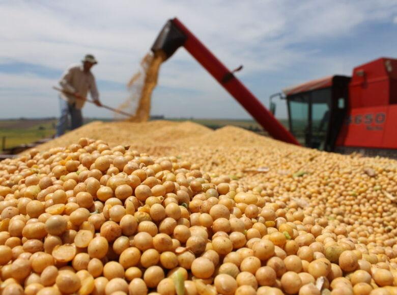 Área plantada de soja aumenta 140 mil hectares e bate recorde no Estado - Crédito: Arquivo