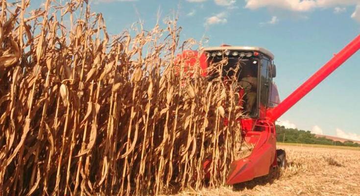 Safra de grãos deve atingir 238,4 milhões de toneladas, estima Conab - Crédito: Arquivo