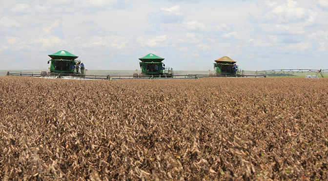 MS deve colher 9 milhões de toneladas de soja - Crédito: divulgação
