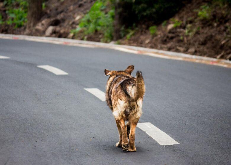 Cachorro solto nas ruas pode gerar multa de até R$ 15 mil ao tutor - Crédito: banco de imagens
