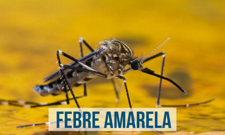 Doença é transmitida pelo mosquito contaminado - Crédito: Divulgação