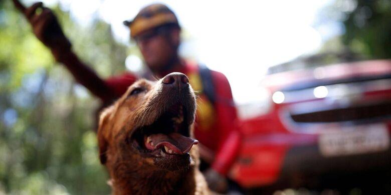 Vale aluga fazenda para cuidar de animais resgatados em Brumadinho - Crédito: REUTERS/Adriano Machado