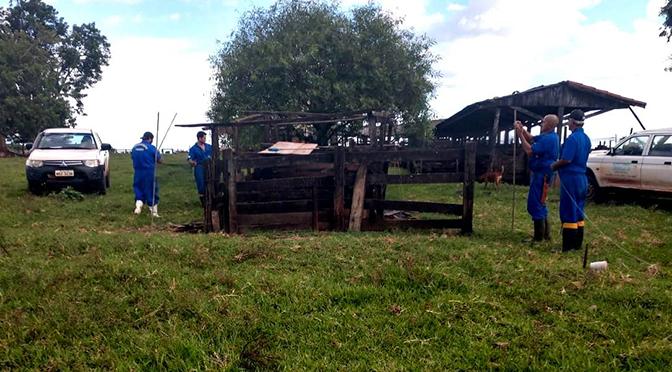 Produtores rurais devem realizar a vacinação em todos os herbívoros para evitar a proliferação da doença - Crédito: Divulgação
