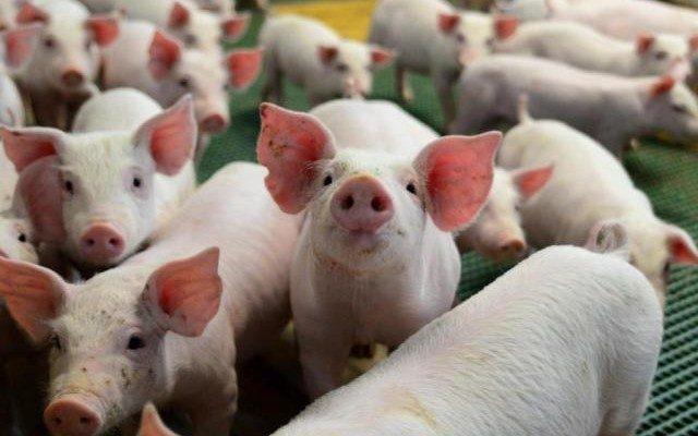 Evento realizado pela Assumas terá debates relevantes para a cadeia produtiva no MS durante a feira agropecuária; 400 produtores são esperados - Crédito: Divulgação