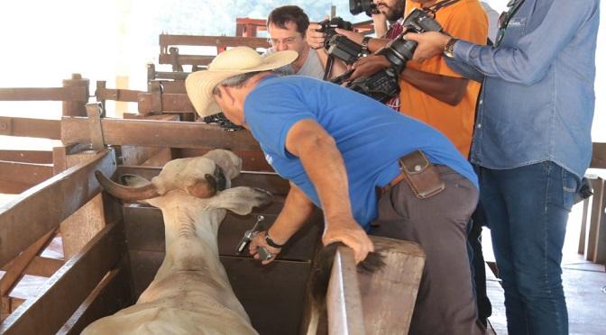 A Atualização do Cadastro da Agropecuária e do Estoque de Animais é uma das exigências do MAPA para retirada da vacinação - Crédito: Divulgação