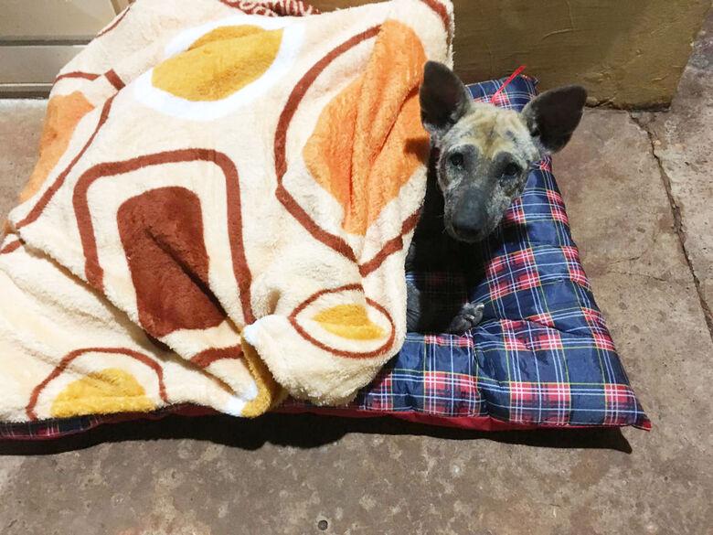 Ela ganhou uma cama nova e uma manta para se aquecer. - Crédito: Louise Torres