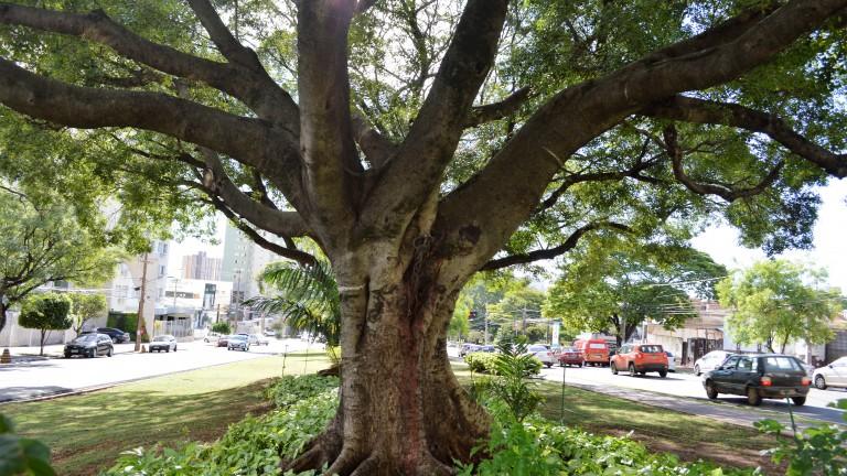 Árvores serão preservadas e paisagem se torna um marco para a capital - Crédito: Divulgação