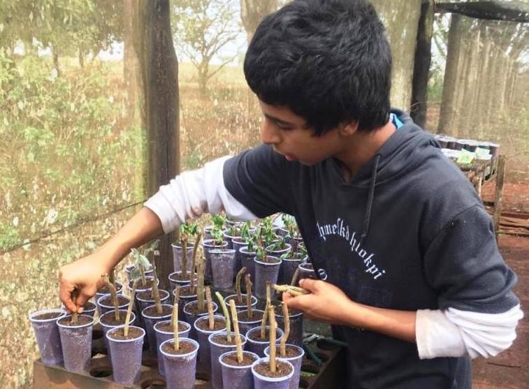 Foram plantadas mudas de manjericão, cebolinha, alecrim, espinheira-santa, hortelã, capim cidreira, hibisco e outras ervas medicinais - Crédito: Divulgação