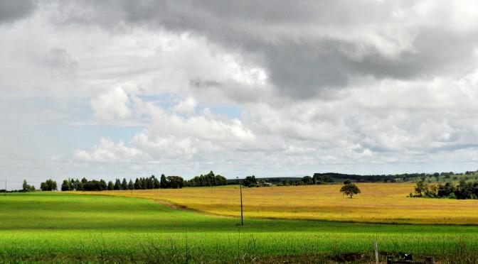 MS foi único estado produtor a aumentar área plantada em 2018 - Crédito: Kelly Ventorim/Semagro