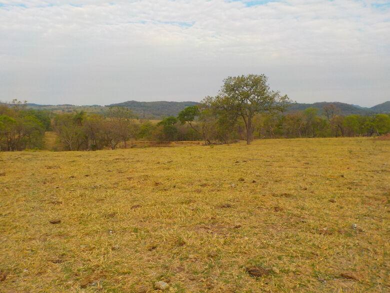 Uma área de 83,36 hectares que era de floresta, virou pastagens - Crédito: Divulgação