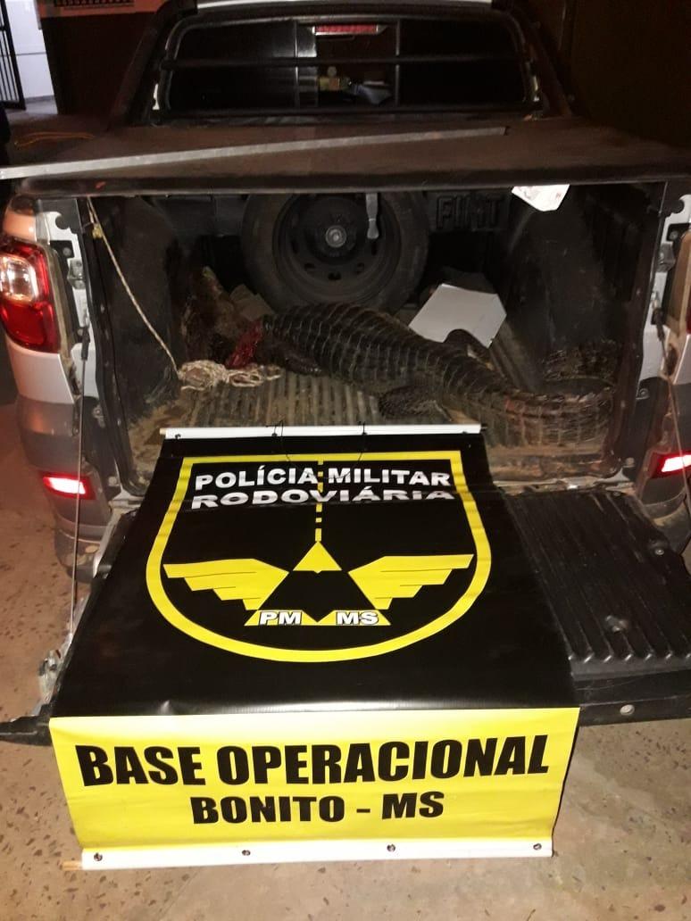 Polícia prende caçadores que mataram jacaré em MS - Crédito: Divulgação