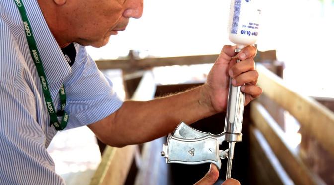Iagro define calendário de vacinação contra febre aftosa em Mato Grosso do Sul - Crédito: Divulgação