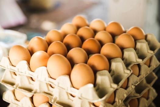 Material desenvolvido visa prolongar a validade de ovos comerciais - Crédito: divulgação
