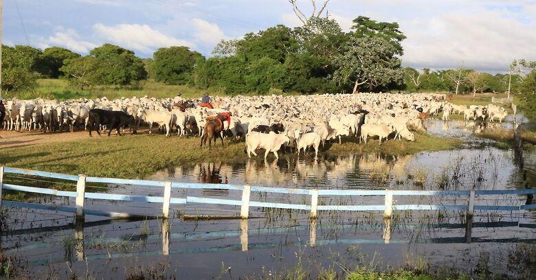 Censo aponta que 61% de propriedades economicamente ativas em MS são da agricultura familiar -
