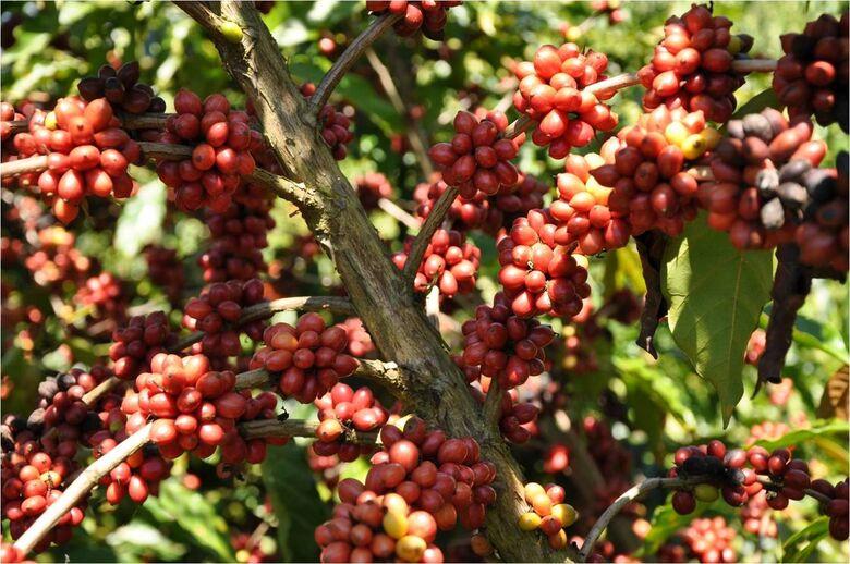 Consumo de café atinge 168 milhões de sacas -