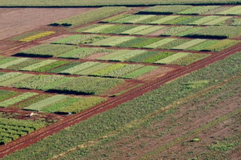 Vista aérea da área experimental comandada pelo professor Luiz Carlos - Crédito: UFGD