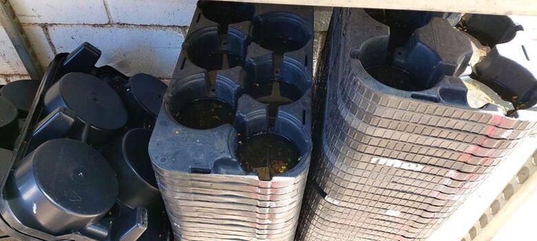 Supermercado leva multa de R$ 53,6 mil por 67 focos de dengue -