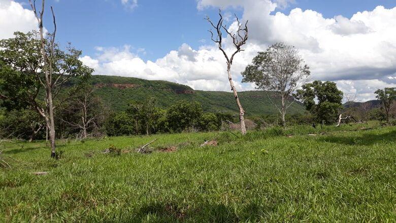 PMA esteve na fazendo e encontrou pastagem no lugar de desmatamento - Crédito: Foto: PMA