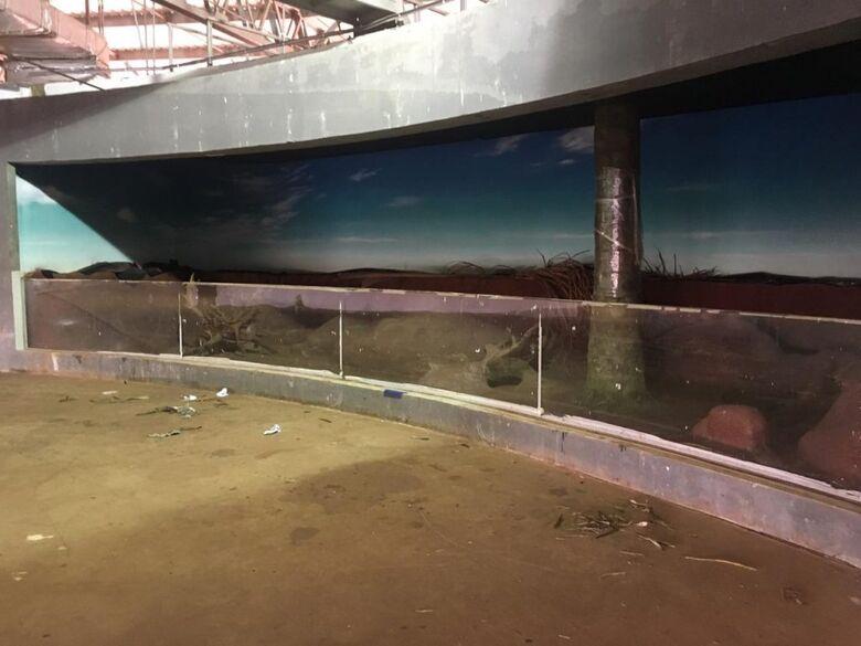 Aquário do Pantanal lança novo edital para impermeabilizar 32 tanques - Crédito: Chico Ribeiro