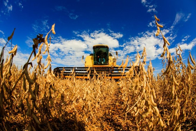 Safra de grãos deve crescer 3,1% em fevereiro -