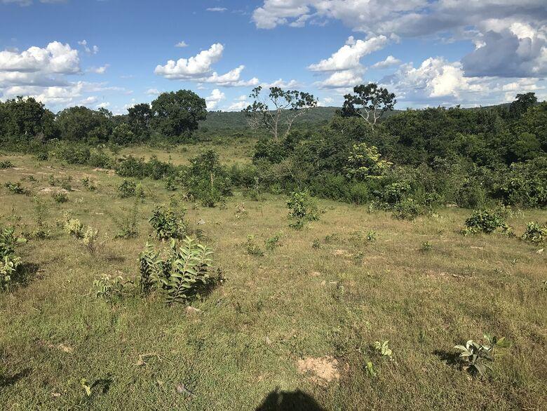 Empresário campo-grandense é autuado por desmatamento -