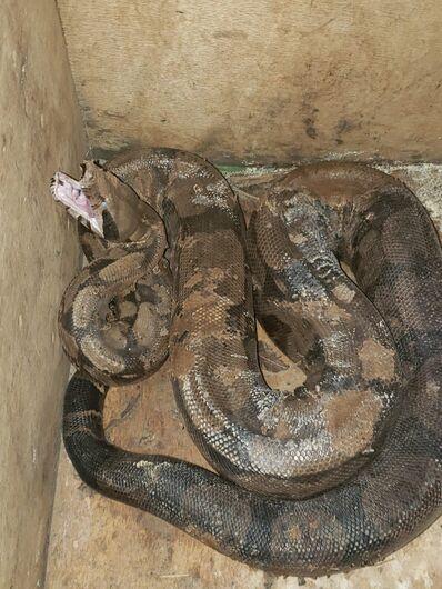 Duas serpentes foram capturadas em 1 hora na Capital -