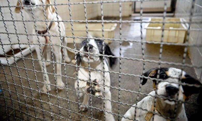 Adoção de animais domésticos é opção em meio ao isolamento social - Crédito: Fabio Rodrigues Pozzebom/Agência Brasil