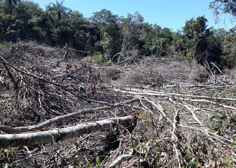 Fazendeiro é multado em R$ 21 mil por extrair madeira ilegalmente de reserva no interior de MS - Crédito: PMA/Divulgação