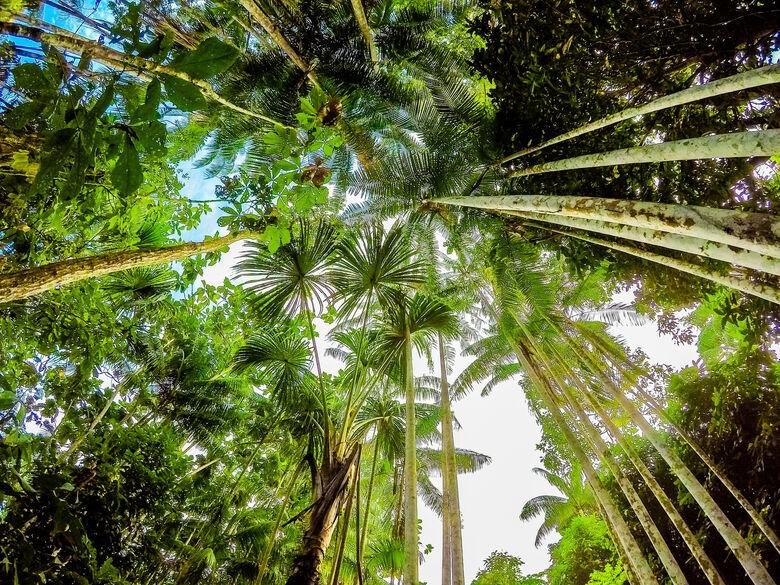 Mourão: país está comprometido com atividades sustentáveis na Amazônia -