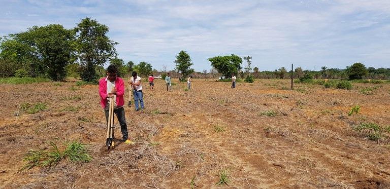Terras indígenas recebem quase R$ 1 milhão para recuperação de vegetação nativa - Crédito: Funai