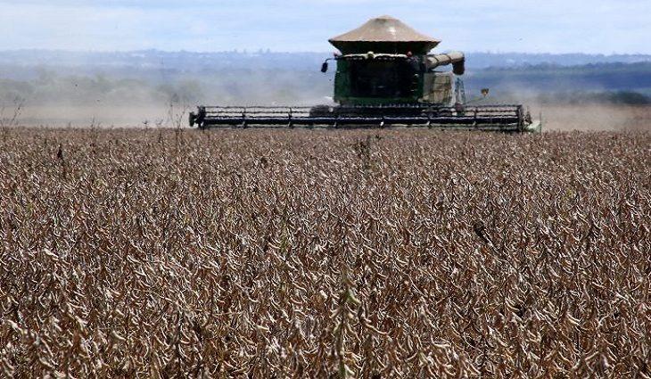 Mato Grosso do Sul tem a 5ª maior produção de grãos do país -