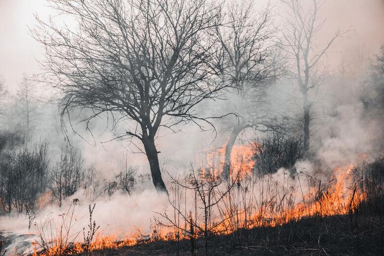 Queimada do Pantanal é a maior catástrofe ambiental desde a seca de 70 -