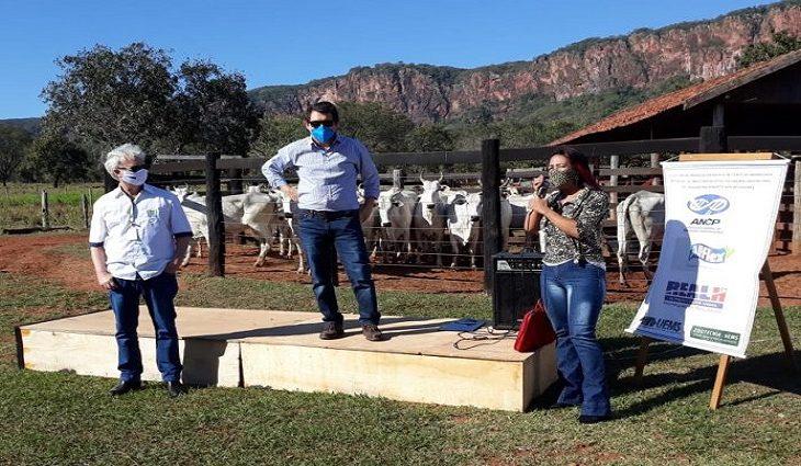 Leilão de bovinos realizado pela SAD supera meta e arrecada R$ 106 mil -