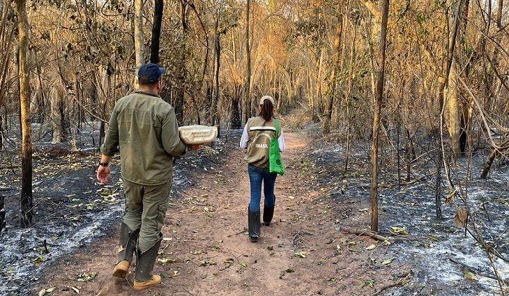 Com provas suficientes, PF poderá indiciar fazendeiros por queimadas no Pantanal -