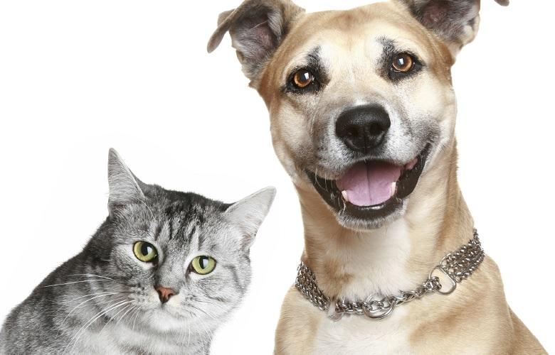 Senado aprova aumento de pena para agressores de cães e gatos - Crédito: Divulgação