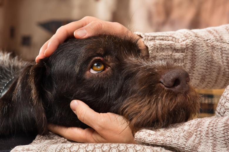 Prefeitura arcará com castração e vacinas de gatos e cães acolhidos -