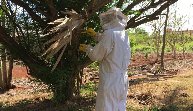Temidos, marimbondos podem controlar pragas nas plantações - Crédito: Divulgação