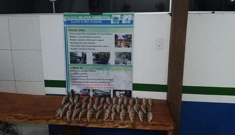 Pescador é preso com 44 exemplares de peixes em MS - Crédito: Divulgação