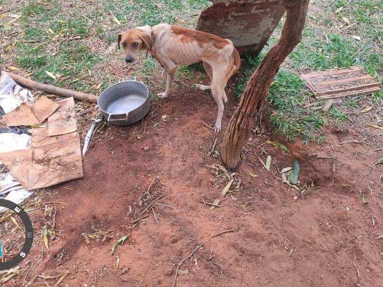 Um dos animais estava tão debilitado que não conseguiu se levantar - Crédito: divulgação/PMA
