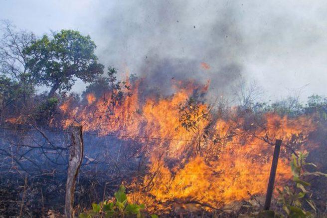 Governo libera R$ 3,81 milhões para conter queimadas no Pantanal - Crédito: Divulgação