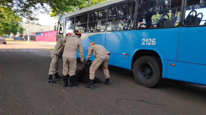 Capivara é resgatada na região central de Dourados -
