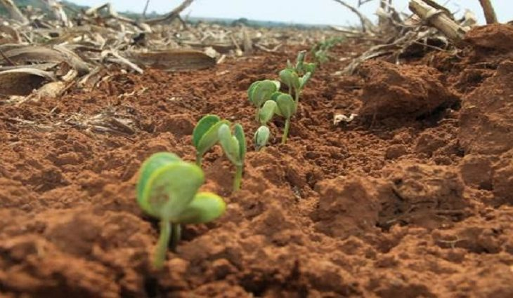 Produtores aproveitam chuvas e apressam plantio da soja, que pode ter nova safra recorde - Crédito: Arquivo