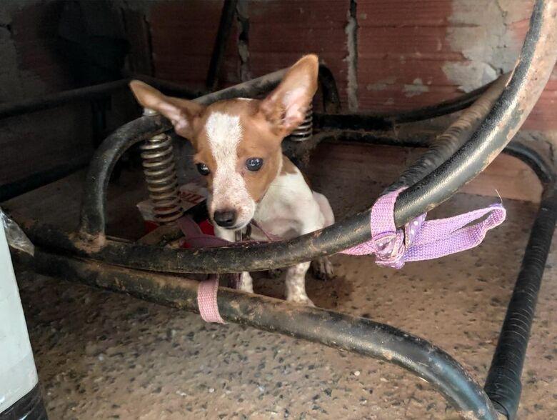 Homem é preso em Bonito por maus tratos a animais -